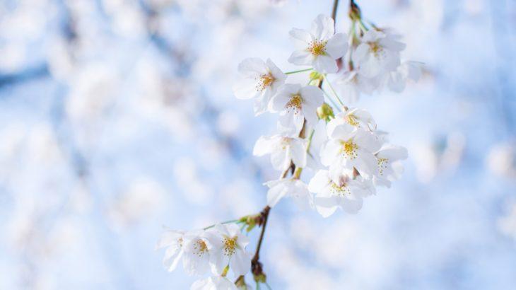 桜にも旬があるように旬がある!